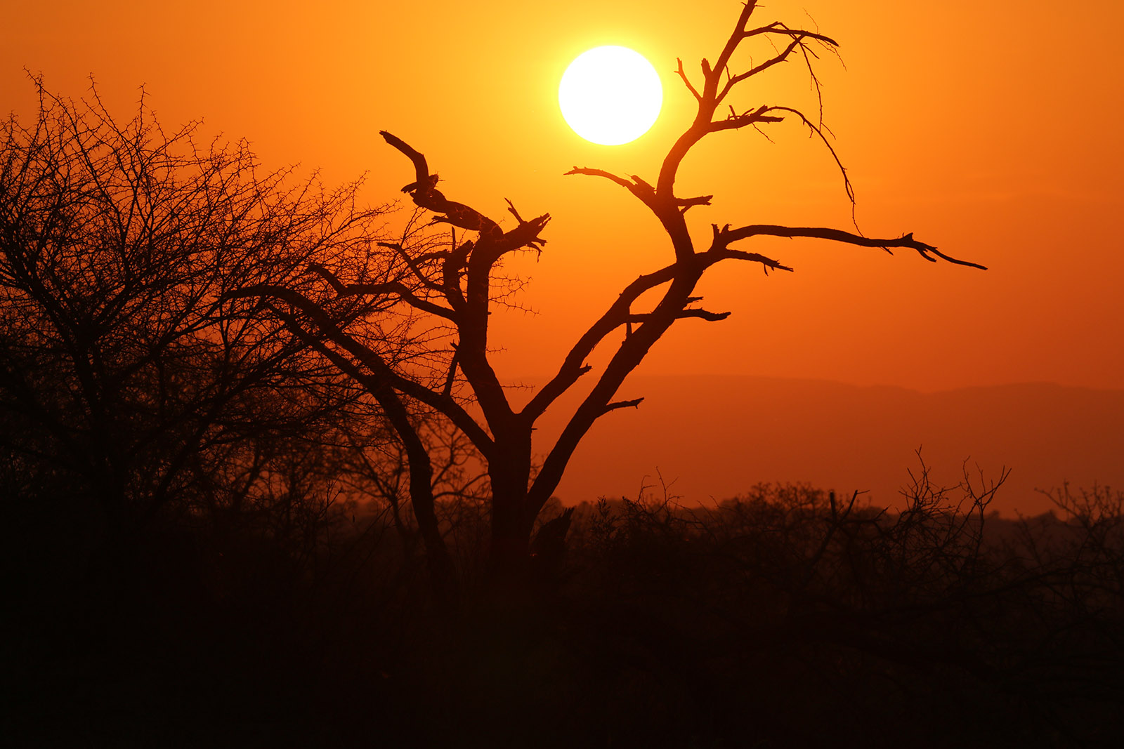 Südafrika-1010